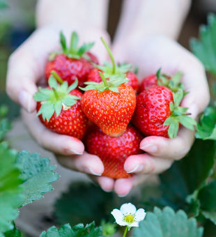 Love The Red: Strawberries